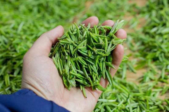 毛尖和龙井茶哪个好喝,毛尖滋味醇香龙井滋味甘醇