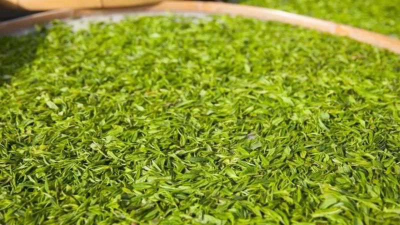 茶叶分类及六大茶类的代表茶
