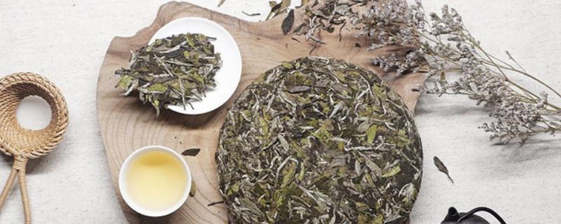 福鼎白茶是发酵茶吗