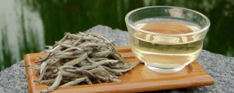 福鼎白茶适合什么季节喝