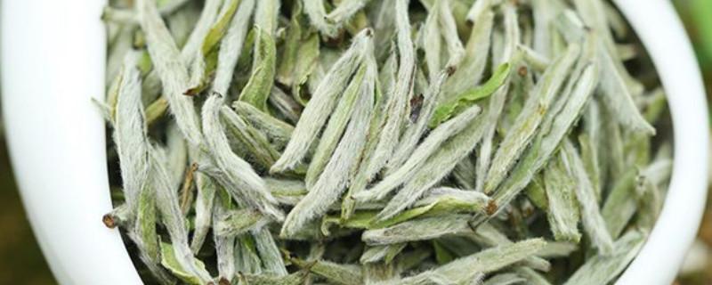 福鼎白茶属于绿茶还是红茶