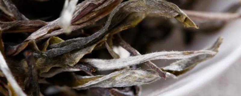 茶叶里的绒毛是什么