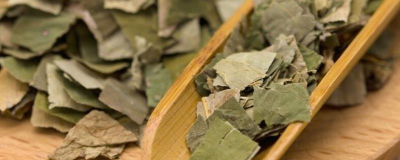荷叶茶的功效与作用,喝荷叶茶的好处有哪些