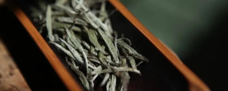 白茶是不是年份越久越好