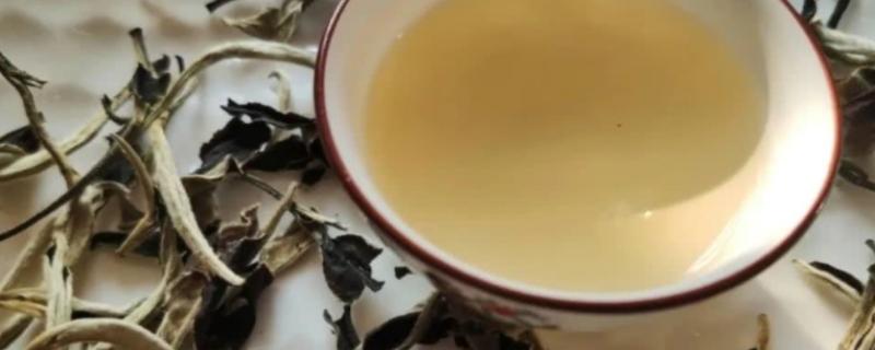 老白茶怎么泡