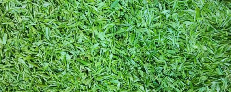 茅山青峰是什么茶叶