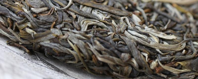 明前古树茶是什么茶