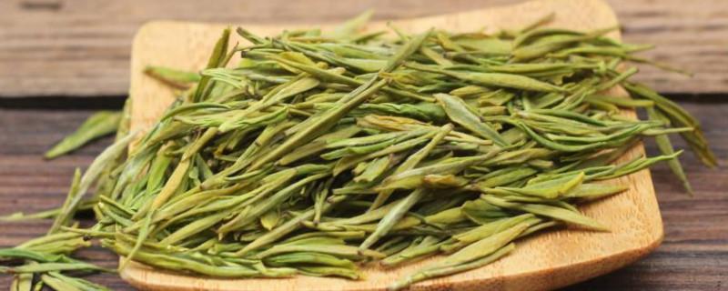 黄金芽茶叶是什么茶