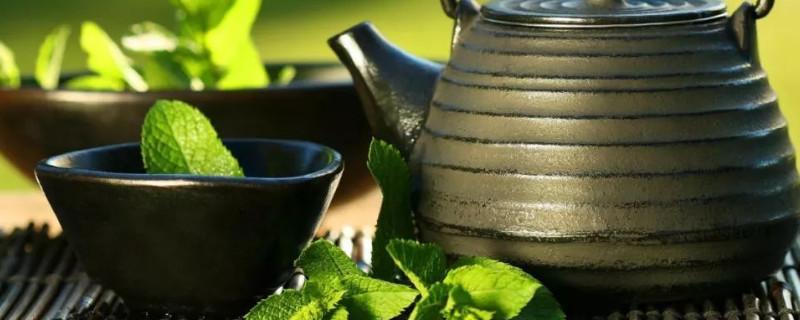 银峰是属于什么茶