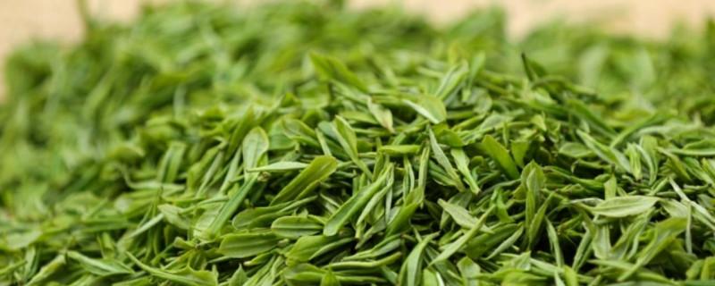 井冈翠绿属于什么茶