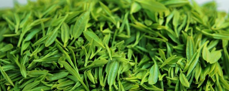 绿茶什么意思